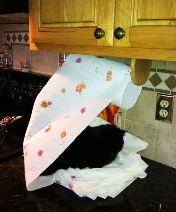 cat sleeping on tissue