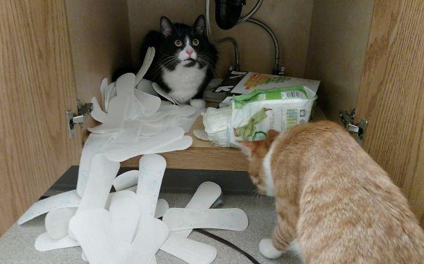 cat spills pantyliners