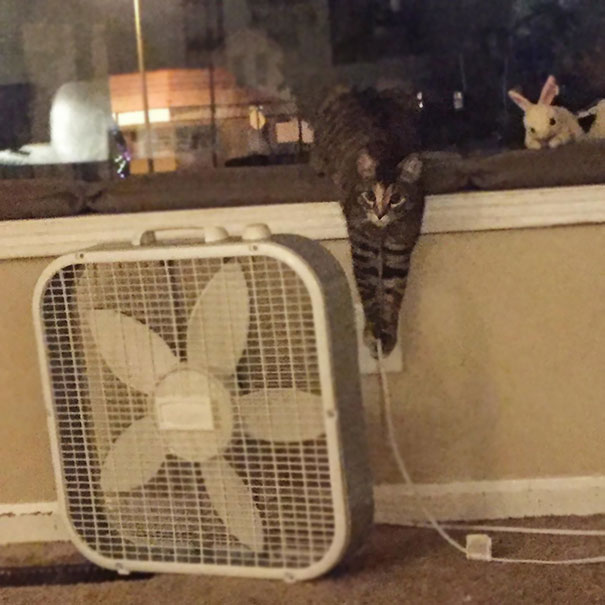 cat unplugging fan