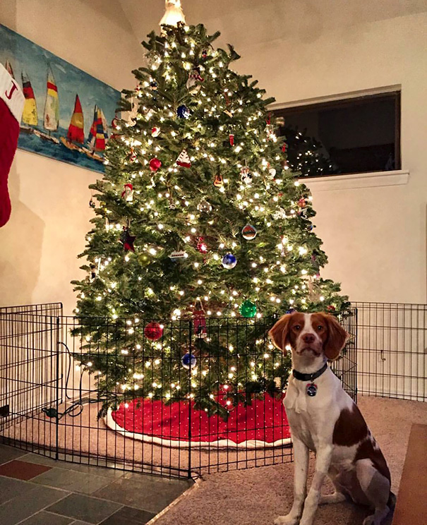 dog stay away from tree