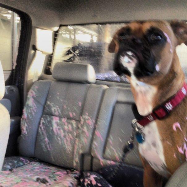 dutchie opens window during carwash