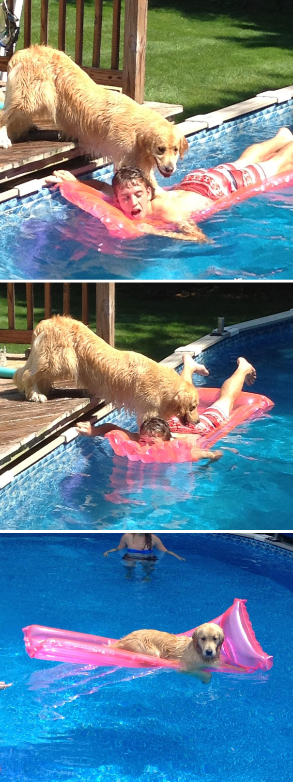 dog drowning human