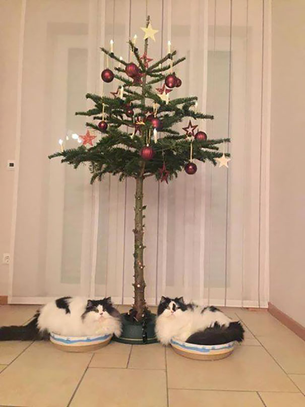 short christmas tree