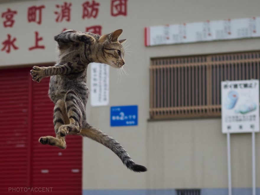street cat fighter
