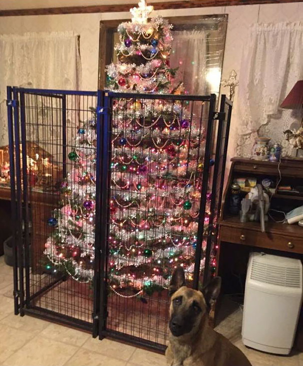 tree caged from dog