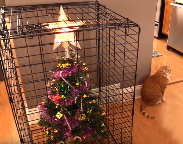 tree in a cage