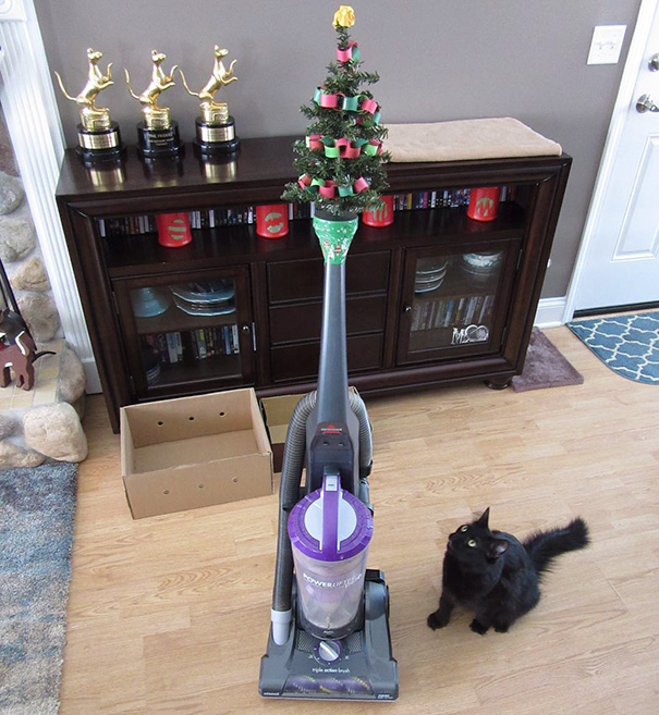 tree on a vacuum
