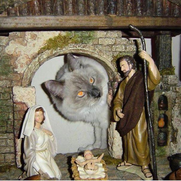 a dinocat in a nativity scene