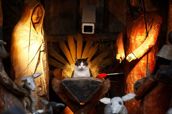 cat crashes church nativity