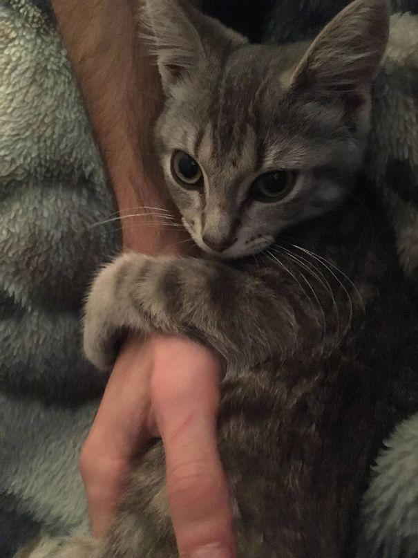 clingy cat