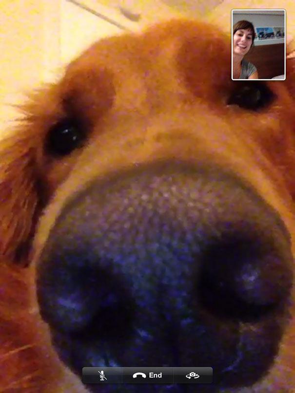 dog wants to skype