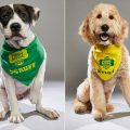 Puppy Bowl Line Up Cutie