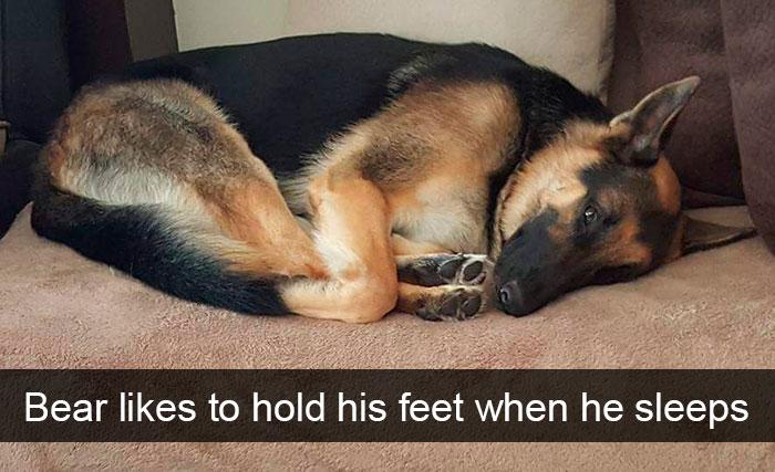 cute dog sleep