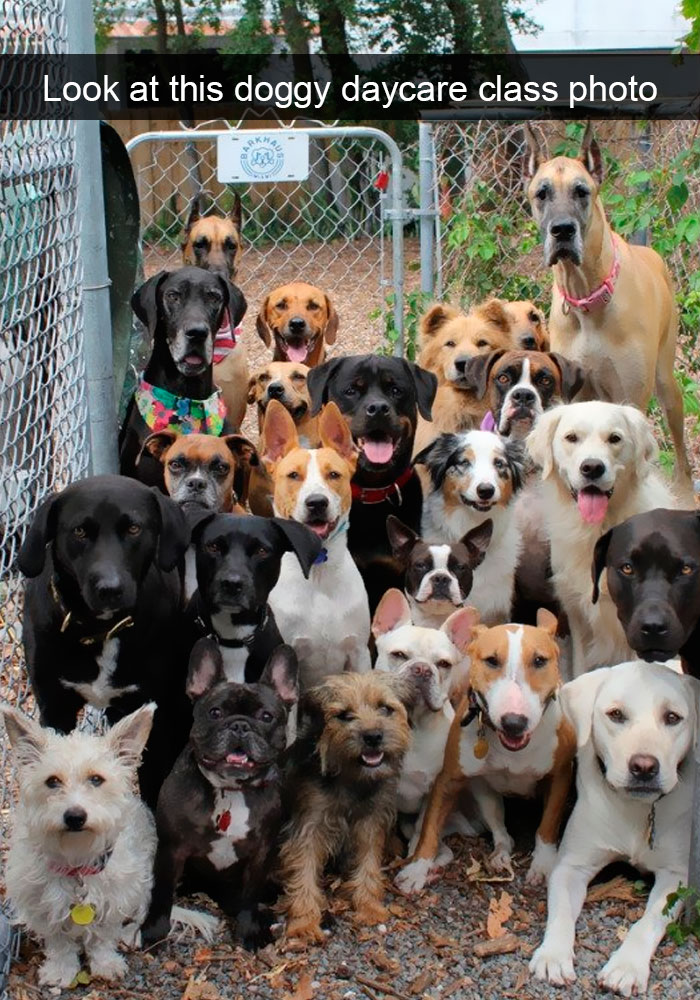 dog class photo