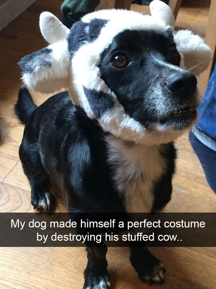 dog cow