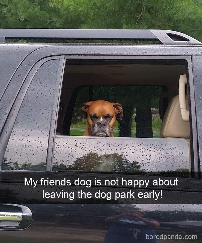 dog is angry
