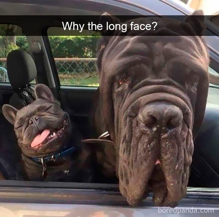 dog opposite looks