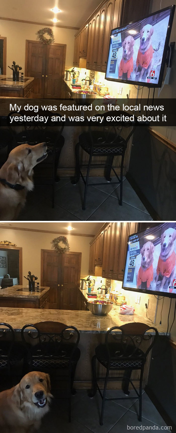 dog sees himself on TV