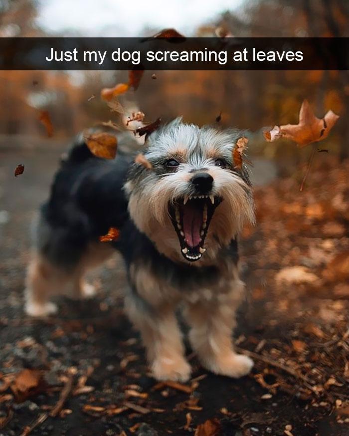 dog shouts