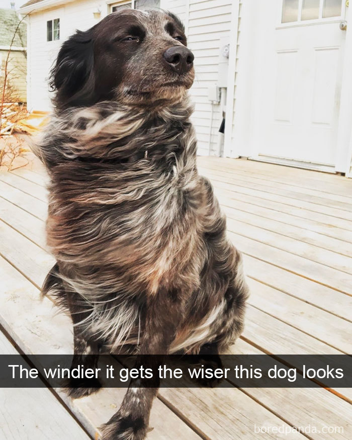 dog windy