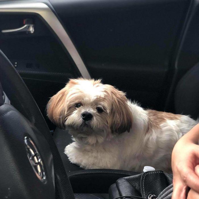 dog drive thru