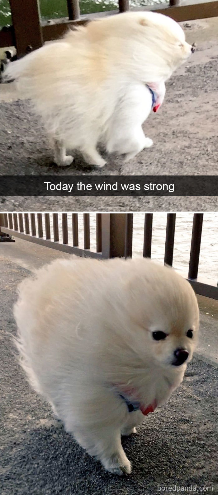 wind on dog's face