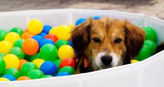 Dog in ball pool