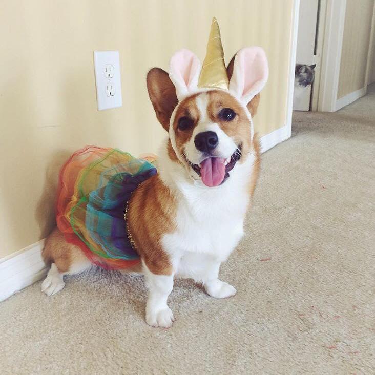 Dog bunny in tutu