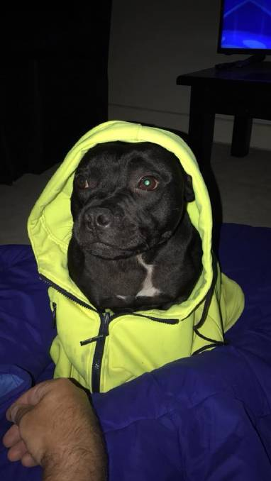 Dog needs jacket