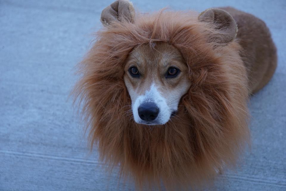 aslan from narnia