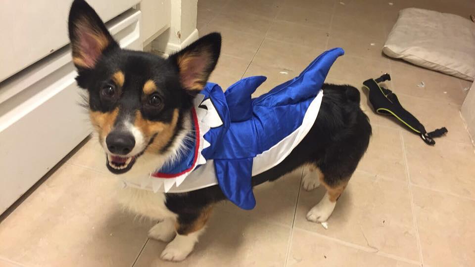baby dog shark