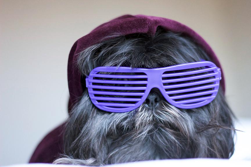 black ghetto dog