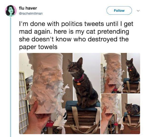 cat destroyed paper towels