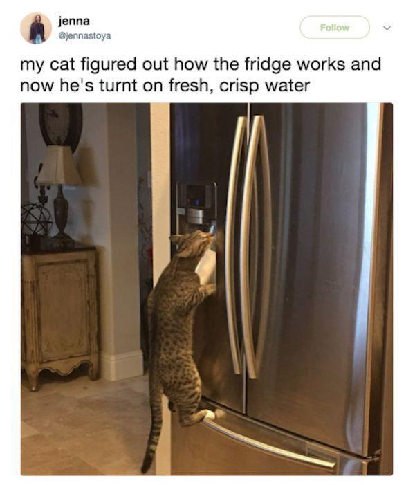 cat drinks water from the fridge