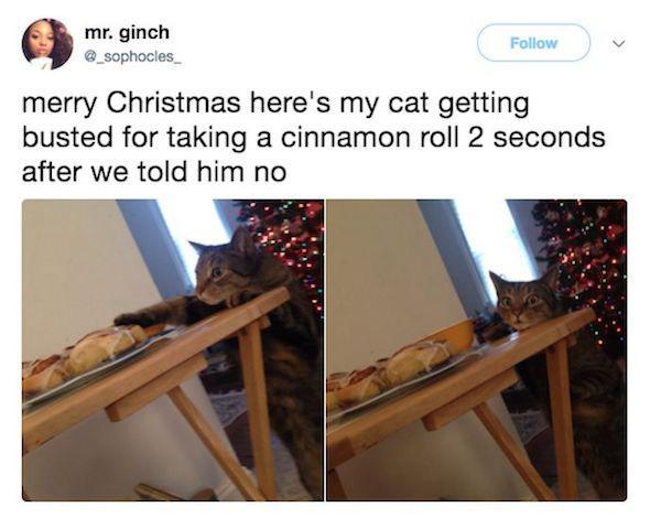 cat getting cinnamon rolls