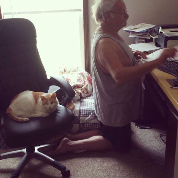 cat overthrown owner