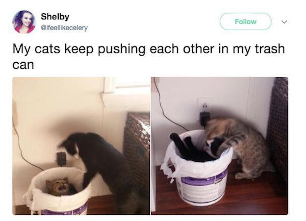 cats pushing each other on the trashcan