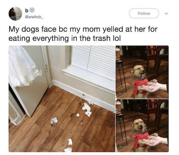 cute guilty face