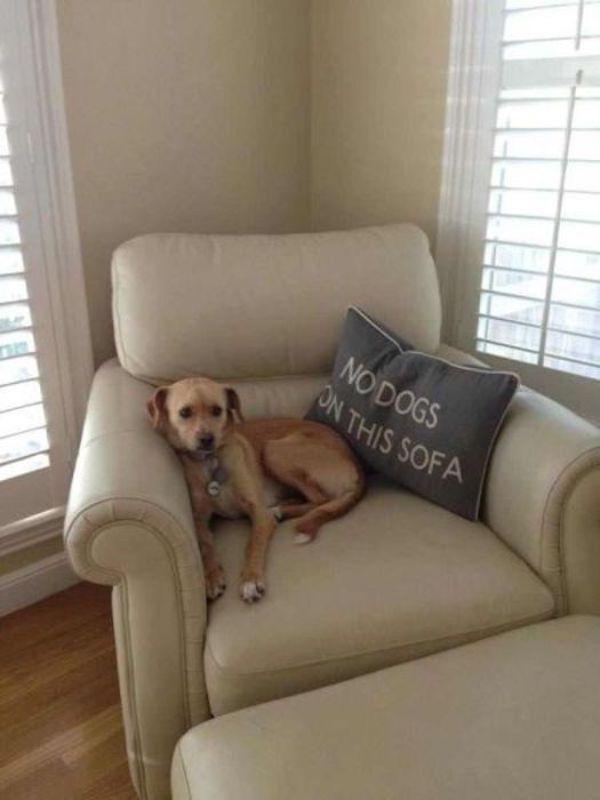 dog defying rule