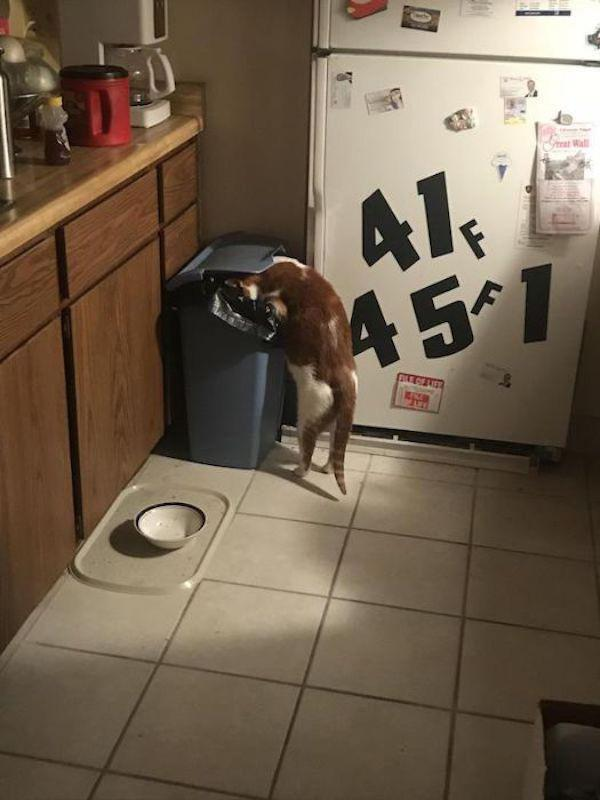 dog eating trash