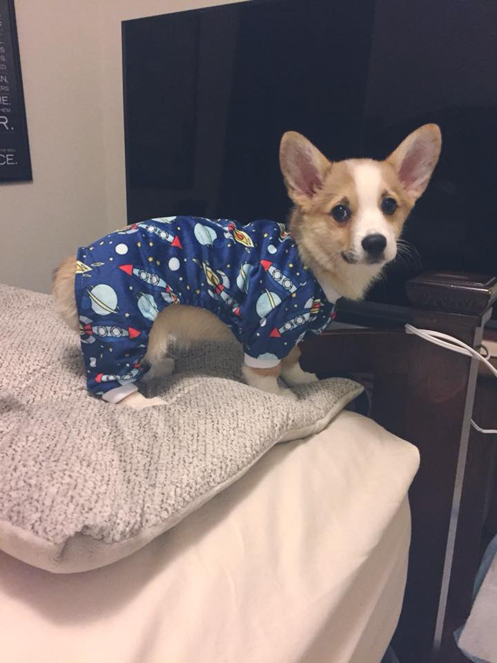 dog in astronaut pjs