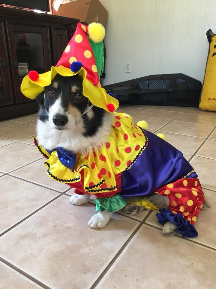 dog sheriff