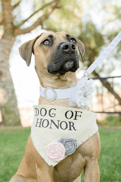dog of honor collar