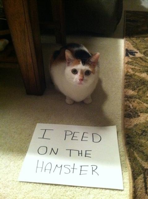 dog peed on hamster