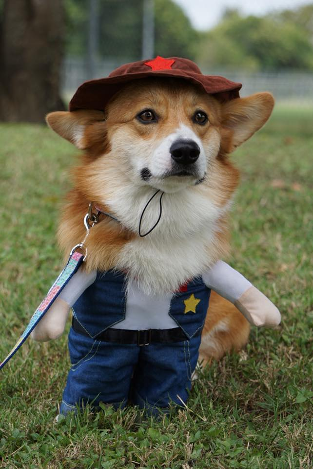 dog sheriff