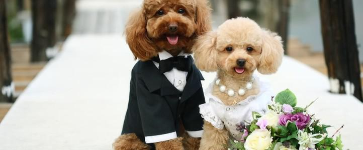 little bride and groom