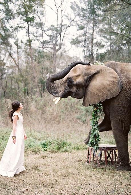 other pet elephant