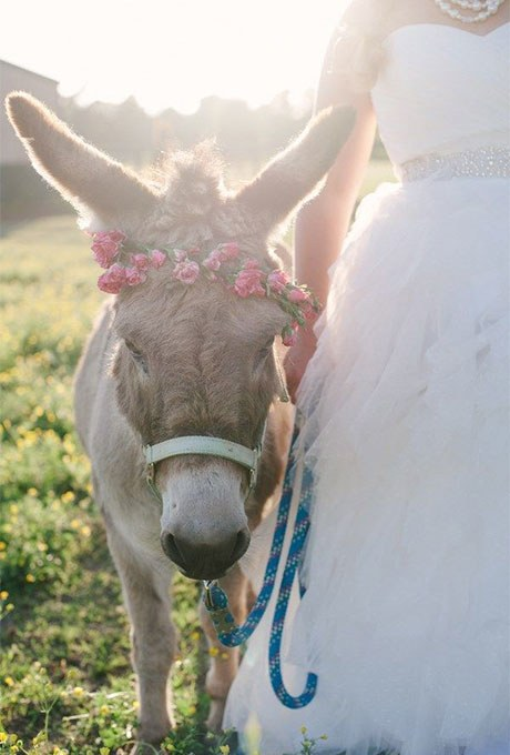 other pet horse flower