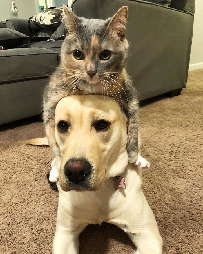 Thinking Cat on dog