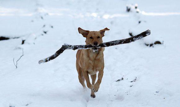 dog running in Sydenham woods